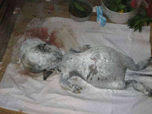 la creatura de tailandia  Criatura-de-tailandia4